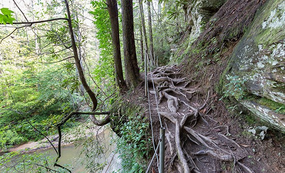 Panther trail as it runs along the river
